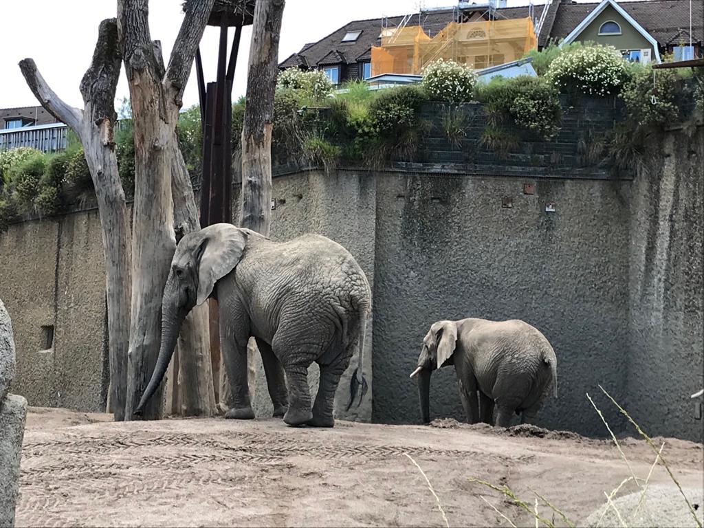 Visita al Zoologico